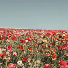 CHAMP DE FLEURS 🌹 - Un petit bout de nature.⠀⠀⠀⠀⠀⠀⠀⠀⠀ Plutôt ville ou campagne ?⠀⠀⠀⠀⠀⠀⠀⠀⠀ -⠀⠀⠀⠀⠀⠀⠀⠀⠀ #champdefleurs #flowerfield #summer