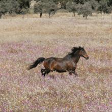 LIBERTÉ 🐎 - « Tu n'as pas besoin de courir le monde après ton destin comme un cheval sauvage »⠀⠀⠀⠀⠀⠀⠀⠀⠀ Qui a la référence ?⠀⠀⠀⠀⠀⠀⠀⠀⠀ -⠀⠀⠀⠀⠀⠀⠀⠀⠀ #freedom #dirtydancing #bebe
