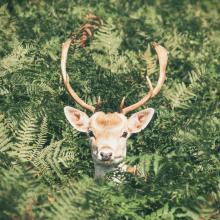 COUCOU 🦌 - On espère que votre rentrée s'est bien passée et que vous êtes prêtes à commencer l'année du bon pied ! Bon courage à toutes ❤️⠀⠀⠀⠀⠀⠀⠀⠀⠀ -⠀⠀⠀⠀⠀⠀⠀⠀⠀ #deer #hellodear #backtowork