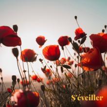 S'ÉVEILLER 🌱 - Un champ de coquelicots au petit matin. Quelle est votre fleur préférée ? - #mondaymorning #coquelicots #mondaymood #campagne