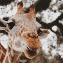 VENDREDI 🦒 - Coucou c'est le weekend ✨⠀⠀⠀⠀⠀⠀⠀⠀⠀ Vous avez prévu quoi ce weekend ?⠀⠀⠀⠀⠀⠀⠀⠀⠀ -⠀⠀⠀⠀⠀⠀⠀⠀⠀ #weekend #girafe