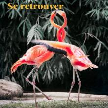 SE RETROUVER 🦩 - Nous, heureux de pouvoir enfin vous retrouver. Vous nous avez manqué. - #flamingo #hug #allinthistogether