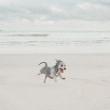 RUN RUN RUN 🏃🏼♀️ - Quand on vous dit qu'il ne reste plus que quelques jours de Ventes Privées...⠀⠀⠀⠀⠀⠀⠀⠀⠀ -⠀⠀⠀⠀⠀⠀⠀⠀⠀ #ventesprivees #beach #funnydog