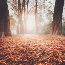 SCROUNCH 🍂 - Est ce que vous entendez ce bruit ? C'est le bruit de nos pieds qui foulent le sol sur des feuilles d'automne 🍁⠀⠀⠀⠀⠀⠀⠀⠀⠀ Prêtes pour cette sensation ?⠀⠀⠀⠀⠀⠀⠀⠀⠀ -⠀⠀⠀⠀⠀⠀⠀⠀⠀ #falllover #automne #scrounch