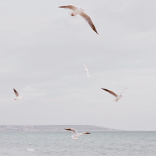 MOUETTES 🕊 - Vendredi liberté, l'appel de la mer.⠀⠀⠀⠀⠀⠀⠀⠀⠀ -⠀⠀⠀⠀⠀⠀⠀⠀⠀ #mer #mouettes #liberte
