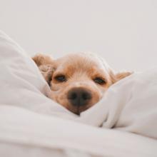 DOUCEUR ☺️ - Programme du weekend ? Se perdre dans nos couvertures...⠀⠀⠀⠀⠀⠀⠀⠀⠀ -⠀⠀⠀⠀⠀⠀⠀⠀⠀ #weekend #confinement #cutedog